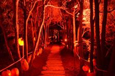 pumpkin_Rise_of_JackOlantern_225